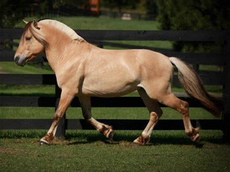 128 best images about Fjord Horses on Pinterest | Water