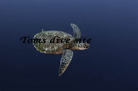 Tom's Dive Site | Underwater Photos, Travel and Instruction
